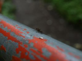 A Fly on a Rail by P8ntBal1551