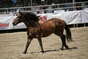 rodeo 3 by xbr0kendevotion