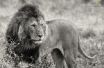 King in the Rain by MorkelErasmus