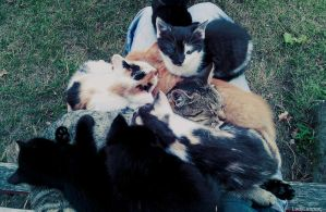 my all cats by LadyLennox