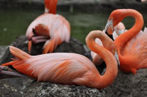 Flamingos by MDBOOKCOVERS