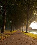 Morning avenue by BDStudio