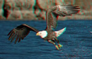 Fishing Eagle Anaglyph by Geosammy