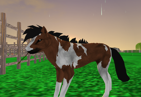 Horse Preset Download (To see in-game) by xMilanTheWolfx
