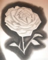 Rose On Charcoal by Rosemev