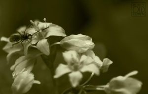 Insect on flowers by Rustyoldtown