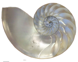 Shell by RD-Stock