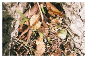 Leaves 001 by Fretish