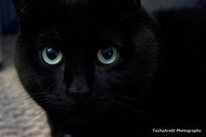 Black Cat 4 by tasha-killer-coma