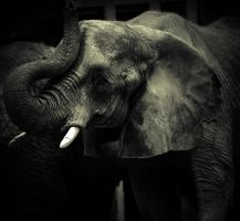 Water for elephants by XxXJaPpAnErDieXxX