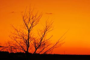 Sunset Series III by LDFranklin