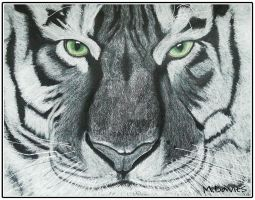 White Tiger by Create-ive