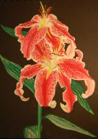 Pink Oriental Lilies by Mararda