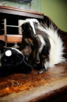Skunk mount 2 by Meddling-With-Nature