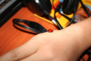 real LadyBird by laFada