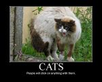 Cats by Noguy