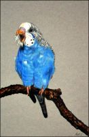 Drawing- Budgie (I'm here-Where are you?) by Ennete