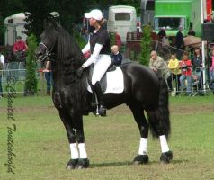 Dressage Friesian standing by Amethyst--Dragon