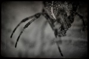 Along Came a Spider by blakk
