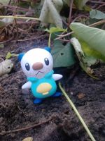 Wild Oshawott appears by Quacksquared