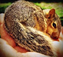 Baby Squirrel 2 by embethe