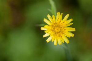 Simply yellow by luka567