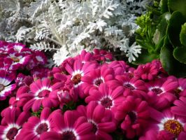 Pink Flowers Unres stock 02 by shelldevil