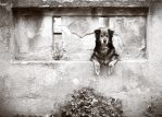 dog in wall by 0verexposed