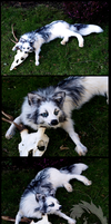 Skyla the arctic marble fox soft mount by Braveheart-Taxidermy