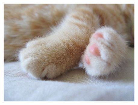 Baby Paws by ChrissieCool