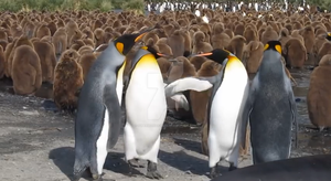 King Penguins fighting with their fins by SuperMarioFan65