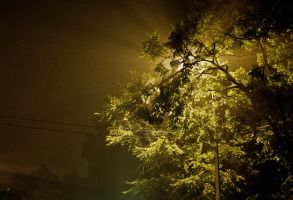 illuminated tree by elhoff