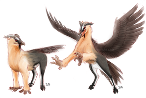 Bearded Vulture Hippogriff by BlazeTBW