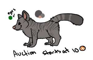 Pygmy Zebracoon Point Auction *CLOSED* by Pumpkabooz