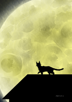 The Cat and the Moon by alexyoshida
