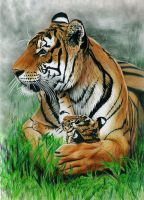 Mother's Love - Colored Pencil Drawing by JasminaSusak
