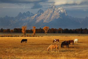 Grand Pastures by Nate-Zeman