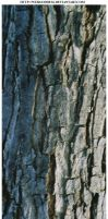 Bark Texture 6 by webgoddess