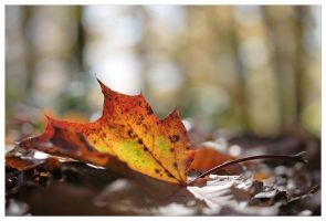 Automne - Autumn by devknu
