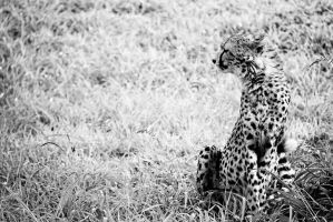 Cheetah Look by SheetalVPhotography