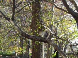 Spot The Squirrel by MeredyxD