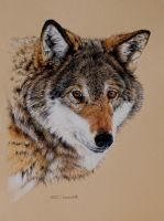 Wolf Portrait (Pencil) by EsthervanHulsen