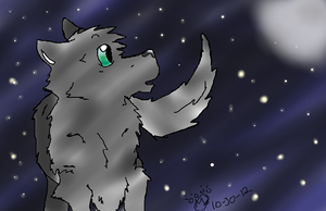 Stary Night Wolf by maxst5011