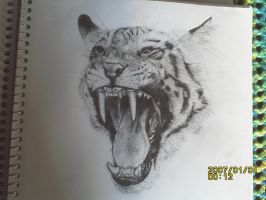 unfinished tiger by ChoRyang