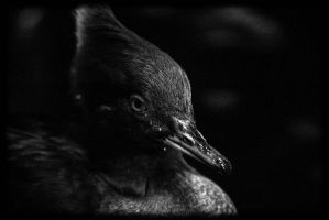 Duck 1 by er111a