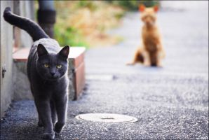Cats by Louti