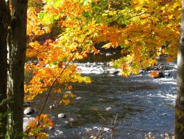 river under the fall color by crazygardener