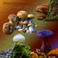 Mushrooms by libidules