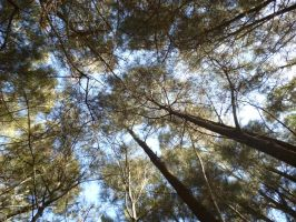 Forest surroundings by Maddyrox14