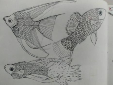 Fish study by Spinian